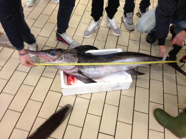 Due tonnellate di pesce congelato sequestrate