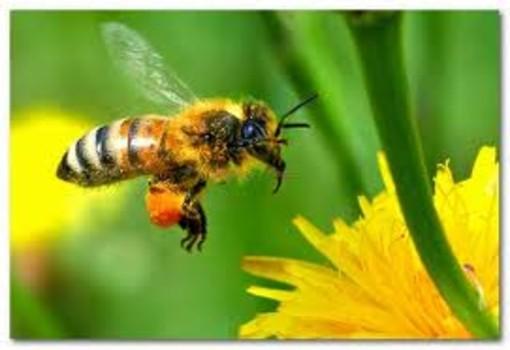 Giornata Mondiale dell'Ape a Genova con il Bee Pride