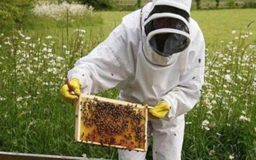 Punture di api, vespe e calabroni? Domani a Rovegno la cittadinanza incontra gli esperti  per conoscere come gestire l'urgenza in caso di reazione allergica