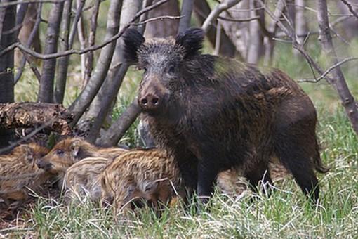 Danni da fauna selvatica alle coltivazioni, domani la Cia in piazza in tutta Italia