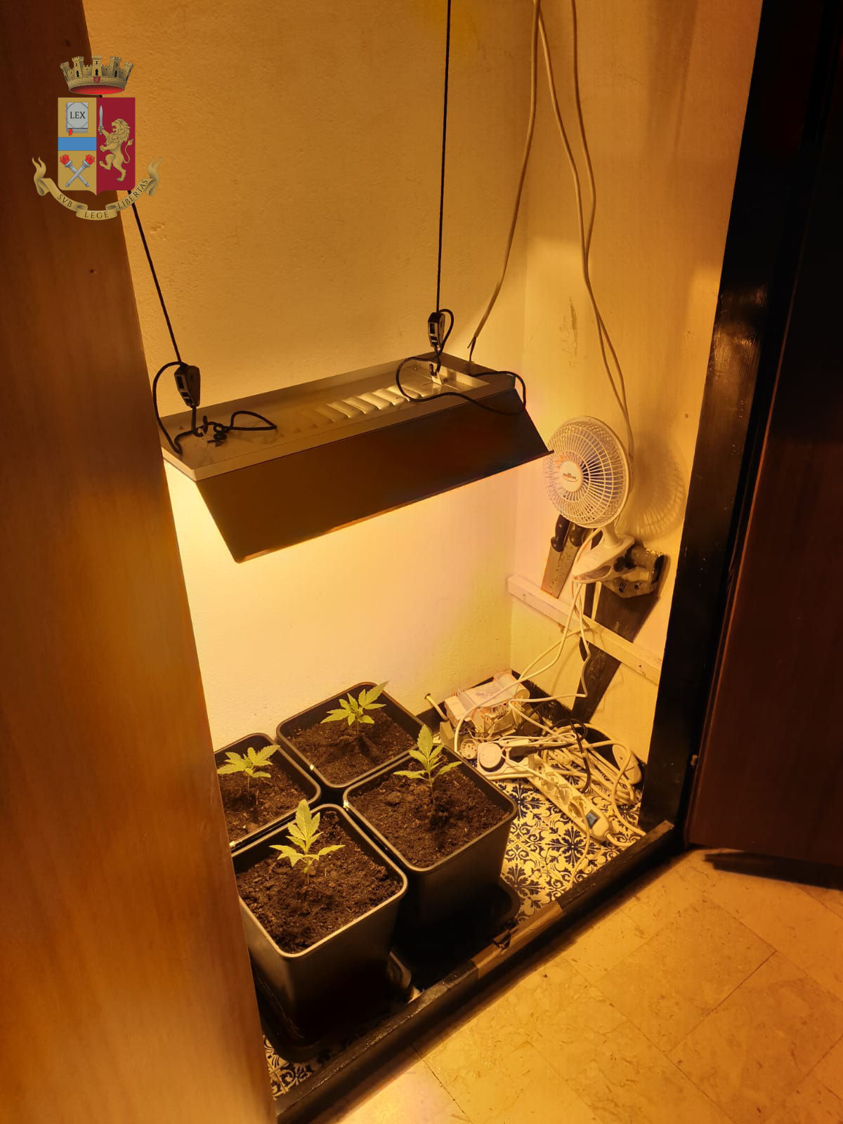 Chiavari: coltiva cannabis all'interno di un armadio. Denunciato 43enne