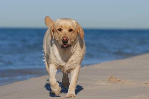 Rapallo: nasce il dog-taxi, l'iniziativa di un'assistente veterinaria