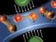 SchemaTransistor: fonte American Chemical Society, rappresentazione grafica del cuore del transistor con campo elettrico e cariche in movimento