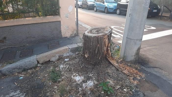 Pegli, petizione per gli alberi e il decoro di via Vespucci