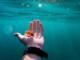 Alga tossica in Liguria, che cos'è la Ostreopsis ovata e i pericoli per l'uomo