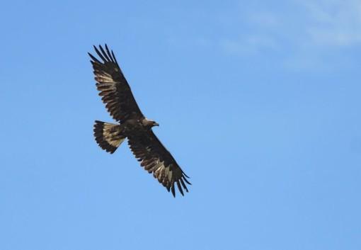 Torna l'Eurobirdwatching nel Parco del Beigua, il 4 ottobre dalle 10 alle 17