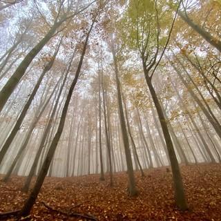 Le sfumature dorate del foliage: trekking nel Beigua Geopark