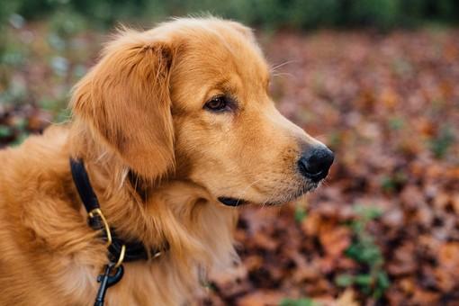 Carignano: cane dimenticato in auto sotto il sole, muore