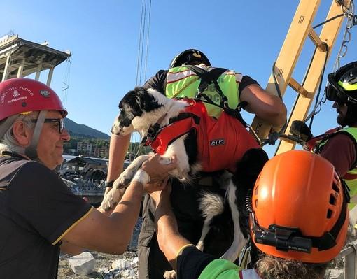 Uno dei cani specializzati nel recupero persone tra le macerie