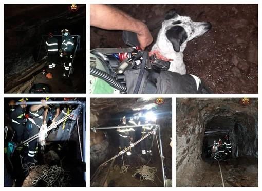 Intervento dei Vigili del fuoco a Nè: salvato un cane caduto in un pozzo (FOTO)