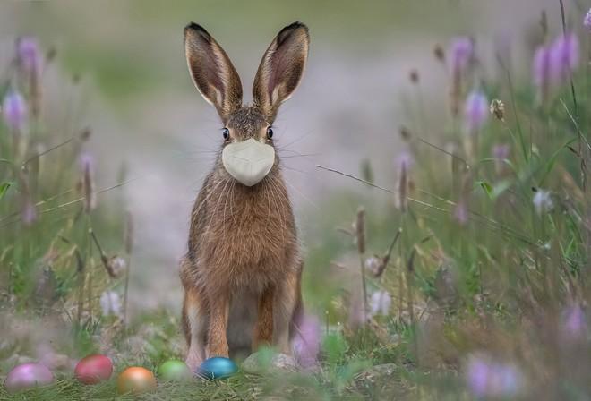 """Il """"coniglio Pasquale in mutande"""", la storia nata a Vado Ligure che fa sorridere i bambini"""