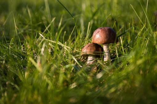 Funghi: i consigli dei micologi della Asl3 in piazza