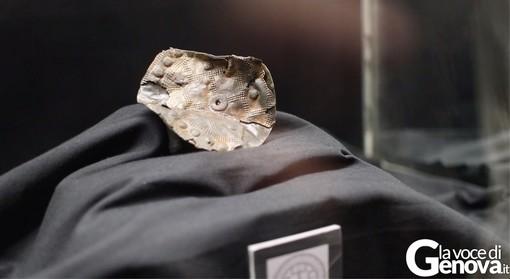 Museo Archeologico di Chiavari: il mistero dei dischi lunari