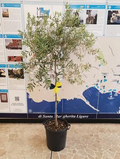 Santa Margherita Ligure: nella Giornata Mondiale dell'Ambiente il Lions Club Santa Margherita Ligure-Portofino dona al Comune un nuovo albero di ulivo