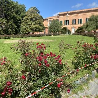 Pegli, l'aiuola centrale di piazza Bonavino torna all'antico splendore