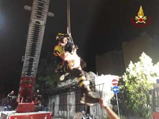 Sampierdarena: crolla un edificio, intervento dei pompieri