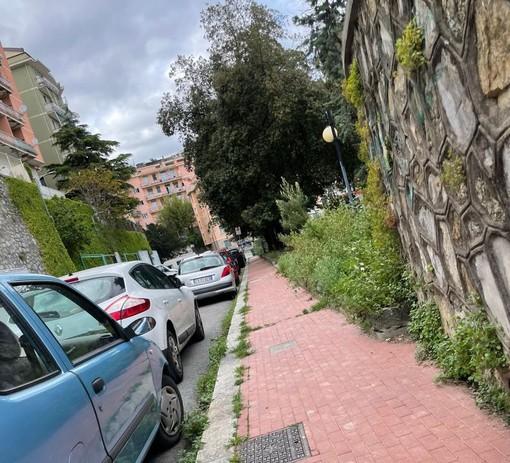 Lotta alla Parietaria, si parte dal Municipio Medio Levante