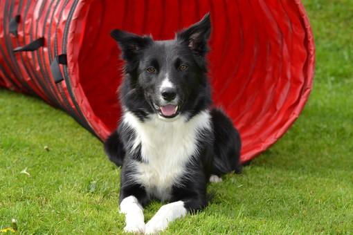A PetsFestival puoi partecipare agli Ability Dog Games con il tuo fedele amico