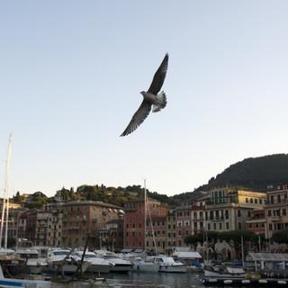 Movida violenta a Santa Margherita, gli esercenti chiedono un incontro all'amministrazione comunale