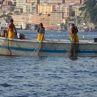 Mare più caldo, così sono cambiati i pesci nel bacino della Liguria