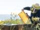 Apicoltura: 35mila euro per le attività di formazione e promozione