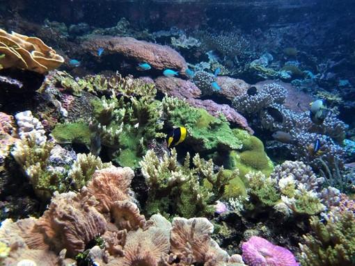 La Commissione europea lancia una coalizione globale a tutela della biodiversità (FOTO)