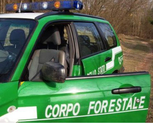 Contratto nazionale forestali: insediato oggi in Uncem il tavolo con sindacati e Mipaaf