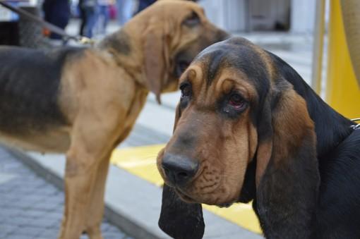 Coronavirus: come tutelare il benessere degli animali da compagnia in un momento di emergenza