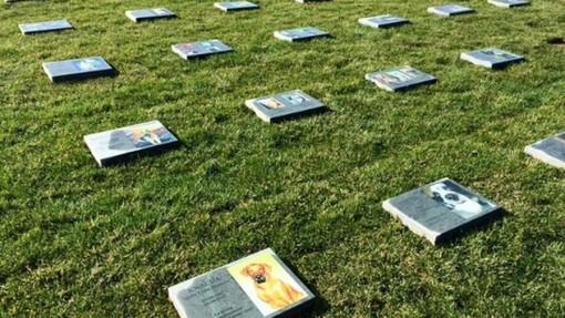 """Tumulazione degli animali di affezione nei cimiteri di famiglia, Tosi (M5S) scrive ai sindaci: """"Adeguate il regolamento"""""""