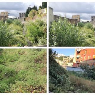 Rio San Pietro e Rio Branega, come due giungle. Le mancate manutenzioni a Pra'