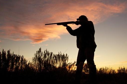 Cane da caccia muore per un'esca avvelenata in Val D'Aveto