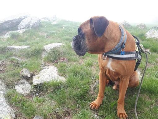 Primo Doggy Trek nel Beigua Geopark: passeggiata nei boschi a 6 zampe