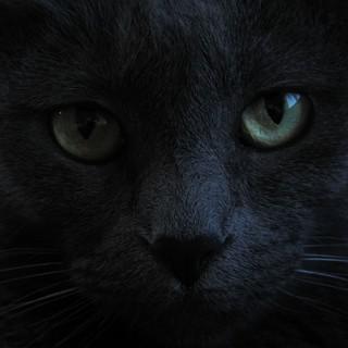 La leggenda delle gatte stregate di Ellera
