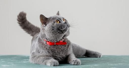 Domande comuni sui gatti e curiosità