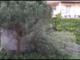 Freddo, vento e nevischio su Genova (VIDEO)