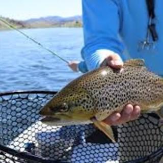 Pesca, domani convegno internazionale online sull'acquacoltura quale motore dell'economia