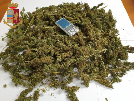 Coltiva marijuana in un terreno del suo bed & breakfast: arrestato un 33enne