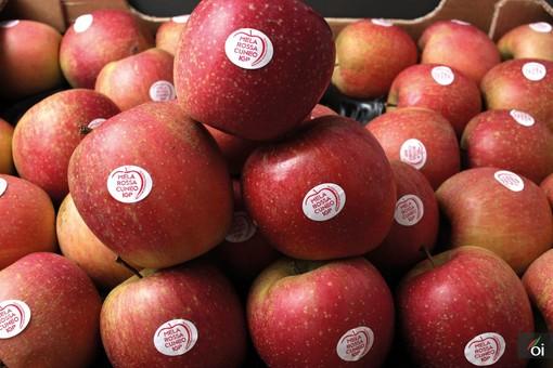 I mercoledìVeg di Ortofruit: oggi prepariamo lo spezzatino di seitan alle mele Fuji