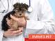 Pronto soccorso animale: cosa fare quando il tuo cane si fa male