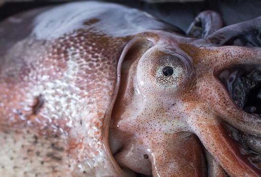 Operazione per la sicurezza alimentare della guardia costiera: sequestrati 800 kg di pesce