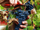 Agricoltura: aperto bando per 91mila euro di fondi per finanziare le cantine