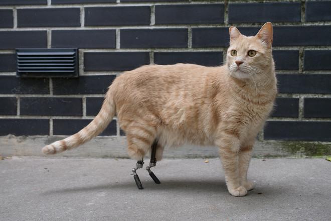 """Vito, il primo gatto bionico italiano: la sua incredibile storia ad """"Albenga Racconta – Storie animate all'ombra delle torri"""""""